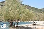 beach Fellos near Gavrio | Island of Andros | Greece  | Photo 11 - Photo GreeceGuide.co.uk