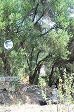nature near Agios Gordis | Corfu | Ionian Islands | Greece  - Photo 2 - Photo GreeceGuide.co.uk