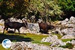 Beautiful landschap - Cephalonia (Kefalonia) - Photo 49 - Photo GreeceGuide.co.uk