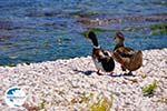 Karavomilos near Sami - Cephalonia (Kefalonia) - Photo 221 - Photo GreeceGuide.co.uk
