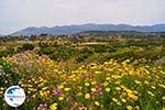 Schiereiland Paliki - Cephalonia (Kefalonia) - Photo 535 - Photo GreeceGuide.co.uk