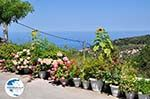 Mooie Flowers in Athani Photo 2 - Lefkada (Lefkas) - Photo GreeceGuide.co.uk