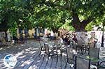 The villagessquare in Englouvi - Lefkada (Lefkas) - Photo GreeceGuide.co.uk