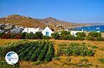 Kalafatis | Mykonos | Greece - Greece  Photo 1 - Photo GreeceGuide.co.uk