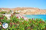 Super Paradise beach | Mykonos | Greece Photo 17 - Photo GreeceGuide.co.uk