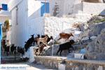 Pserimos Greece | Greece  | Photo 33 - Photo GreeceGuide.co.uk