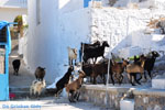 Pserimos Greece | Greece  | Photo 34 - Photo GreeceGuide.co.uk