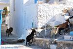 Pserimos Greece | Greece  | Photo 35 - Photo GreeceGuide.co.uk