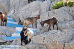 Pserimos Greece | Greece  | Photo 39 - Photo GreeceGuide.co.uk