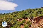 Groene struiken ergen on centraal Samos - Island of Samos - Photo GreeceGuide.co.uk