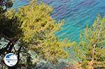 Bomen tot at The sea near Kokkari (beach Tsamadou) - Island of Samos - Photo GreeceGuide.co.uk