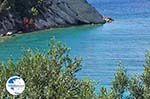 Olive trees  tot at The sea - Lemonakia near Kokkari- Island of Samos - Photo GreeceGuide.co.uk
