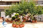 Limenas  - Thassos town |Greece | Photo 1 - Photo GreeceGuide.co.uk