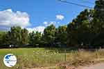 Mytikas - Prefecture  Aetoloakarnania -  Photo 21 - Photo GreeceGuide.co.uk