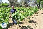 Mr Apostolos Lykos of wijnproducent of the firma Lykos | Euboea Greece | Greece  - Photo 001 - Photo GreeceGuide.co.uk
