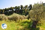 Gouves North-Euboea | Greece | Photo 1 - Photo GreeceGuide.co.uk