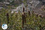 Folegandros - Island of Folegandros - Cyclades - Photo 191 - Photo GreeceGuide.co.uk