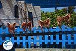 Ano Meria Folegandros - Island of Folegandros - Cyclades - Photo 222 - Photo GreeceGuide.co.uk