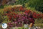 Ano Meria Folegandros - Island of Folegandros - Cyclades - Photo 234 - Photo GreeceGuide.co.uk