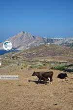 Ano Meria Folegandros - Island of Folegandros - Cyclades - Photo 242 - Photo GreeceGuide.co.uk