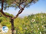 Petaloudes - Valley of Butterflies Rhodes - Dodecanese Greece photo 6 - Photo GreeceGuide.co.uk