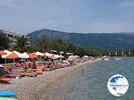 Small pebble beach Dassia (Dasia - Corfu) 5 - Photo GreeceGuide.co.uk