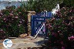Psathi Ios - Island of Ios - Cyclades Greece Photo 301 - Photo GreeceGuide.co.uk