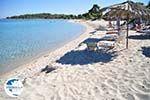 Golden Beach near Pefkochori | Kassandra Halkidiki | Greece  Photo 6 - Photo GreeceGuide.co.uk