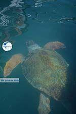 Megisti Kastelorizo - Kastelorizo island Dodecanese - Photo 74 - Photo GreeceGuide.co.uk