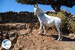 On our way to Kato Meria | Kea (Tzia) Photo 11 - Photo GreeceGuide.co.uk