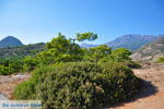 Agia Fotia | Lassithi Crete | Photo 18 - Photo GreeceGuide.co.uk