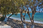 Blefoutis beach Partheni - Island of Leros - Dodecanese islands Photo 21 - Photo GreeceGuide.co.uk