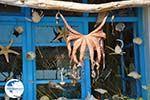 Plomari | Lesbos Greece | Greece  46 - Photo GreeceGuide.co.uk