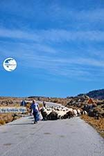 Sheep and shepherds near Sigri | Lesbos Greece | Photo 3 - Photo GreeceGuide.co.uk