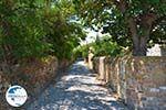 Livadochori Limnos (Lemnos) | Greece | Photo 14 - Photo GreeceGuide.co.uk