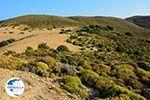Amothines woestijn near Katalakos Limnos (Lemnos)   Photo 15 - Photo GreeceGuide.co.uk