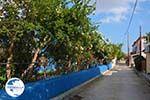 Repanidi Limnos (Lemnos) near Kotsinas | Greece Photo 13 - Photo GreeceGuide.co.uk