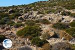 Chivadolimni Milos | Cyclades Greece | Photo 15 - Photo GreeceGuide.co.uk