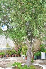 Agios Arsenios Naxos - Cyclades Greece - nr 11 - Photo GreeceGuide.co.uk