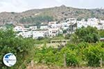 Agios Arsenios Naxos - Cyclades Greece - nr 15 - Photo GreeceGuide.co.uk