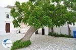 Agios Arsenios Naxos - Cyclades Greece - nr 26 - Photo GreeceGuide.co.uk