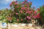 Engares Naxos - Cyclades Greece- nr 30 - Photo GreeceGuide.co.uk