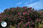 Kalantos Naxos - Cyclades Greece- nr 15 - Photo GreeceGuide.co.uk