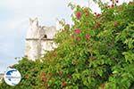 Kato Sangri Naxos - Cyclades Greece- nr 42 - Photo GreeceGuide.co.uk
