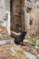 Kato Sangri Naxos - Cyclades Greece- nr 44 - Photo GreeceGuide.co.uk