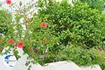Potamia Naxos - Cyclades Greece - nr 33 - Photo GreeceGuide.co.uk