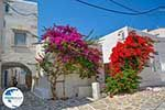 Parikia Paros - Cyclades -  Photo 50 - Photo GreeceGuide.co.uk