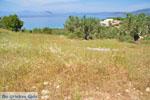 Koilada (Kilada)   Argolida (Argolis) Peloponnese   Greece Photo 23 - Photo GreeceGuide.co.uk