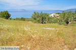 Koilada (Kilada) | Argolida (Argolis) Peloponnese | Greece Photo 26 - Photo GreeceGuide.co.uk