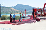 Koilada (Kilada) | Argolida (Argolis) Peloponnese | Greece Photo 34 - Photo GreeceGuide.co.uk